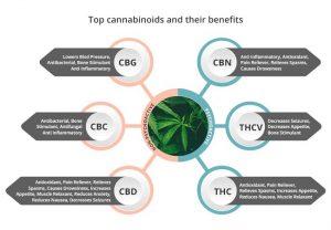 Cannabigerol (CBG): Uses and Benefits