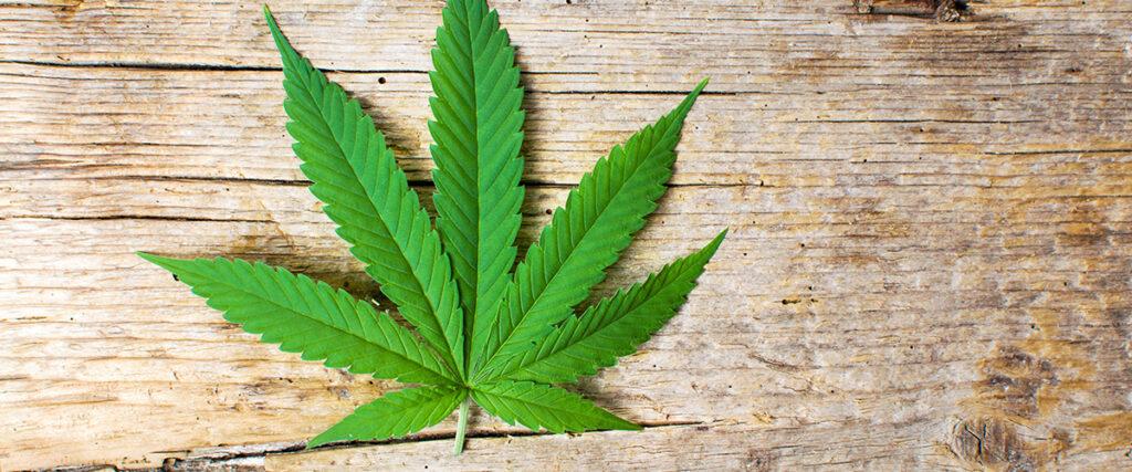 marijuana leaf tea