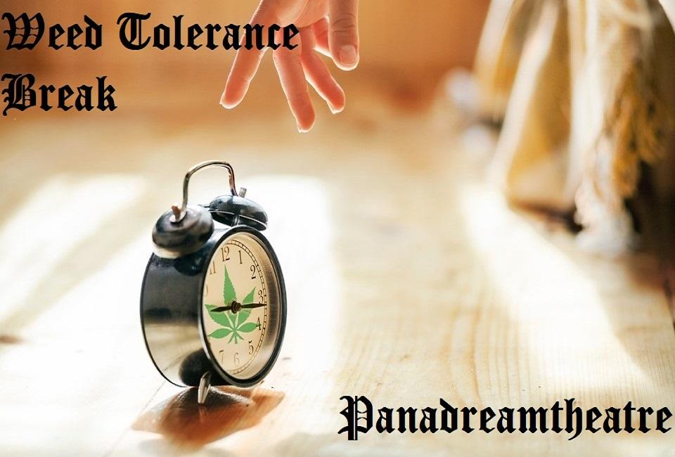 How to Combat Your Tolerance Break to Weed