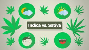 What's the difference between indica and sativa edibles?