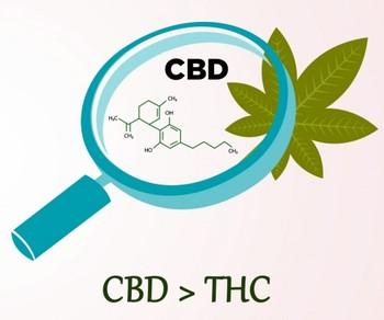 Sativa CBD vs Indica CBD