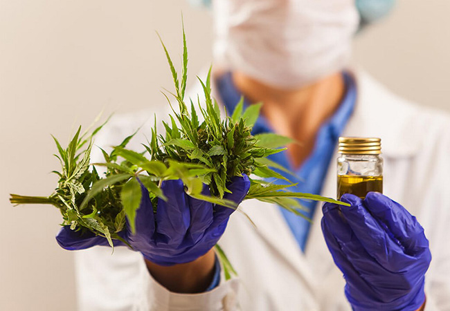 What is the best strain for fibromyalgia?