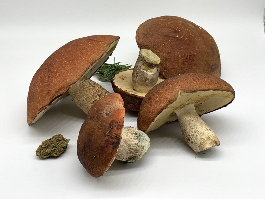 Combining Cannabis with Psychedelic Mushrooms