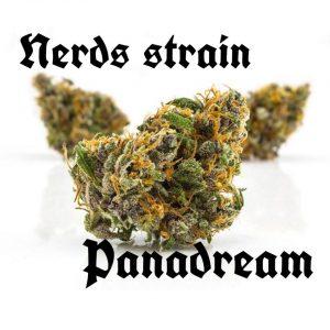Nerds strain