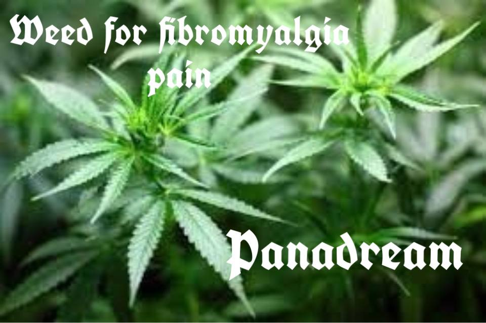 Weed for fibromyalgia pain