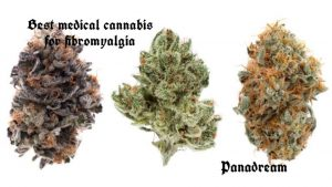 The best medical cannabis for fibromyalgia