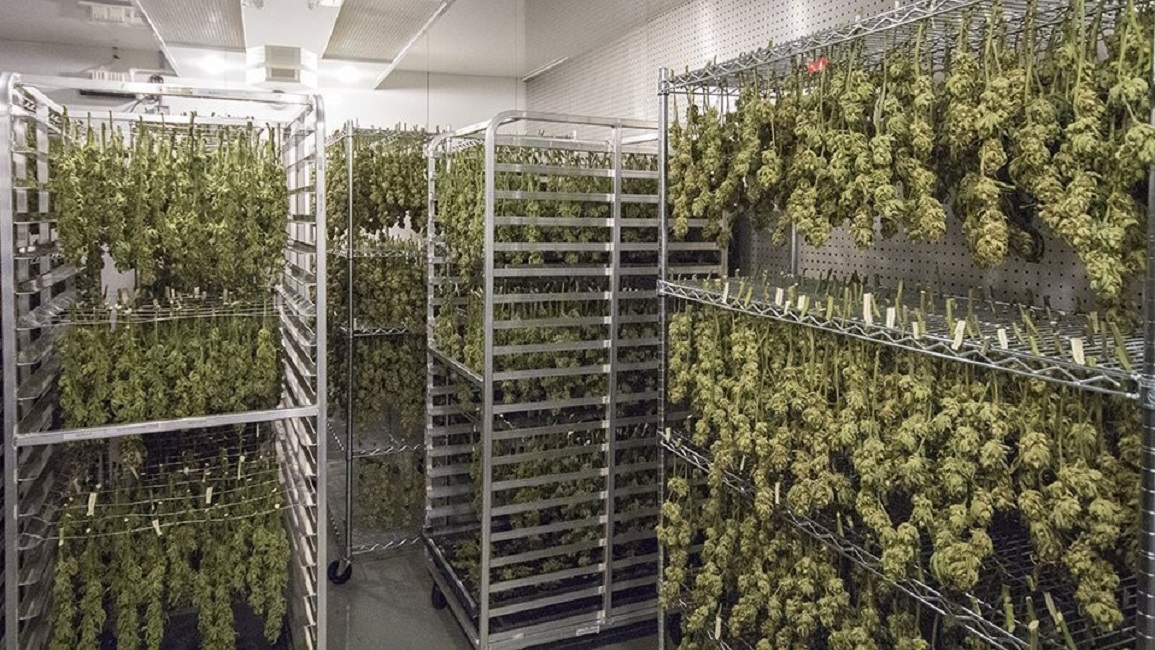 Cannabis Drying Racks