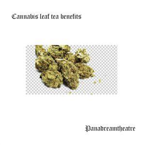 Сannabis leaf tea benefits
