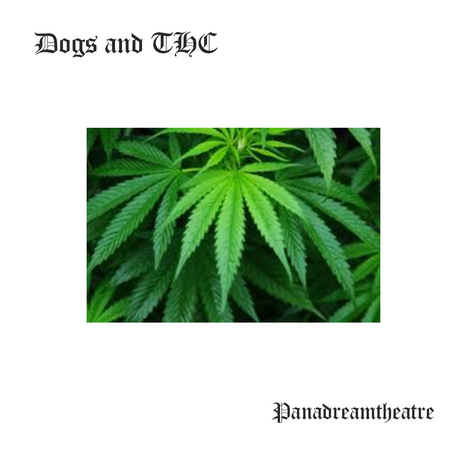 Dogs and THC