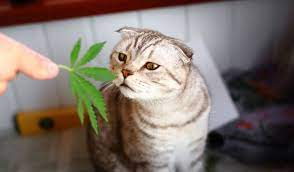 edibles for cats