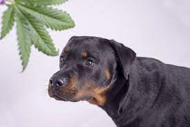 is pot good for dogs