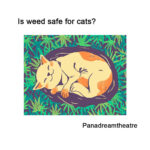 Is weed safe for cats? Can pets get high?